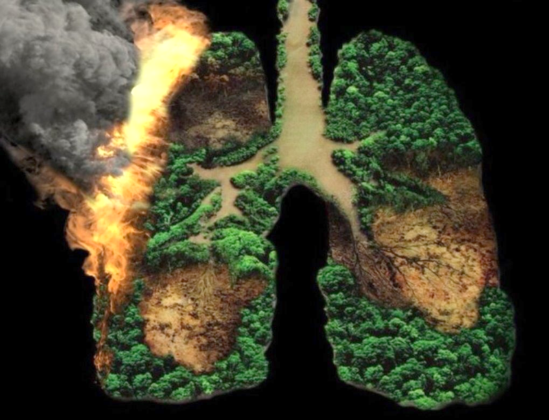 Amazon Rainforest Our Lungs